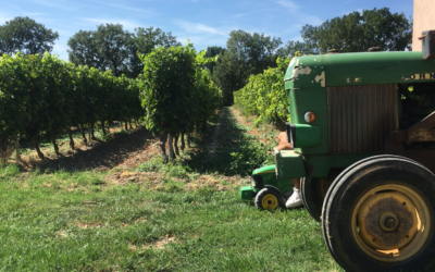In Aix-en-Provence, the 2018 harvest begins!